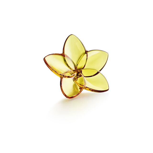 THE BLOOM COLLECTION, Amber